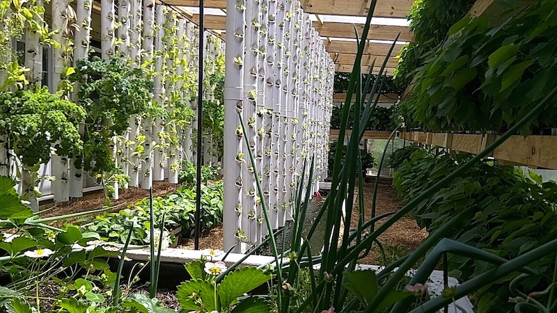 greenhouse_sm1