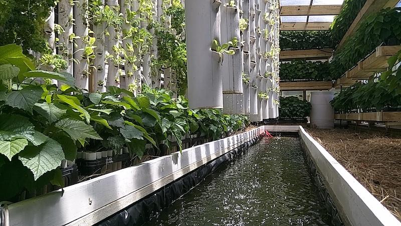 greenhouse_sm3